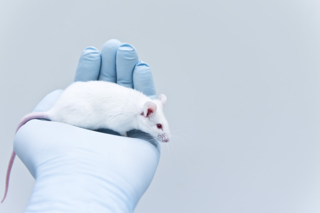 lab mouse shutterstock 556378909