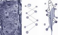 Tetrapods.jpg
