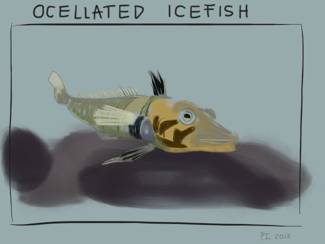 Ocellated-Icefish.png