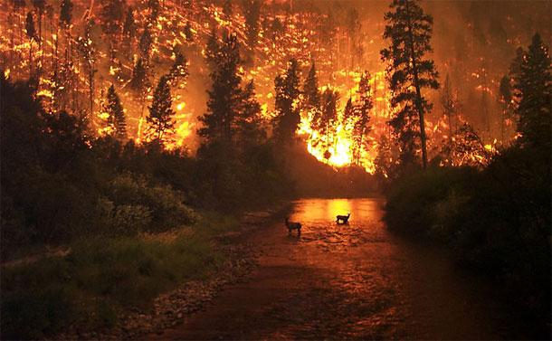 Wildfire Stock