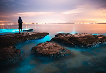Bioluminescent Bays: Where the Nighttime Sea Shimmers With Light