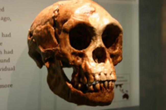 hobbit-skull-2.jpg