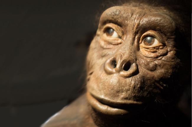 Lucy, Australopithecus africanus - Shutterstock