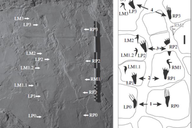 Pterosaur-tracks.jpg