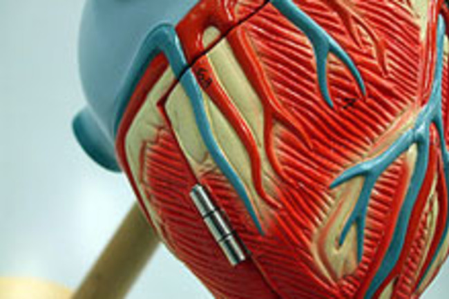 heartweb.jpg