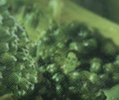 broccoli_face.jpg