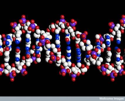 DNA-425x344.jpg