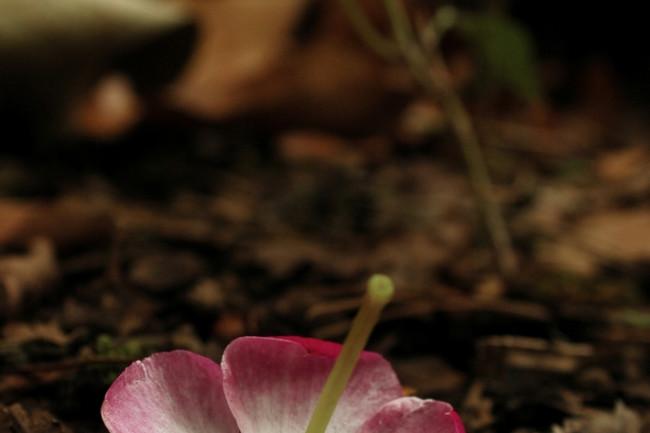 grave-flower.jpg