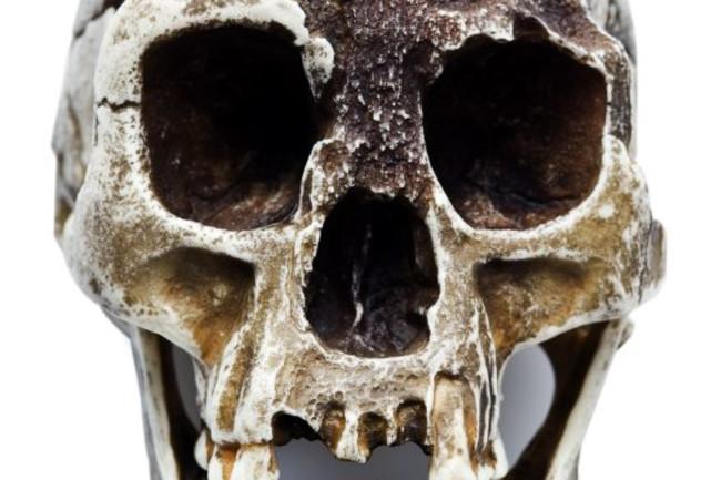 Homo-floresiensis-skull-LB1.jpg