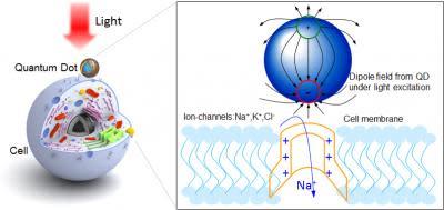 quantum-dot-neuron.jpg
