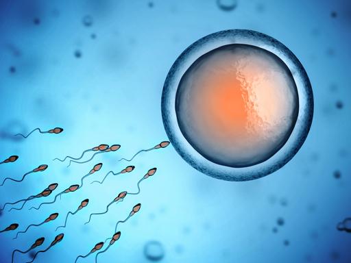 sperm-and-egg.jpg