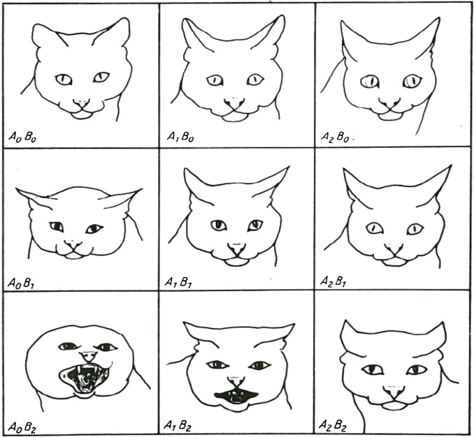 Leyhausen's facial expressions of offensive and defensive mood (taken from Leyhausen 1979) coded using CatFACS. A0B0: neutral face used for reference; A1B0: Upper lid raiser (AU105), Ears adductor (EAD 102), Ears rotator (EAD104), A2B0: Upper lid raiser (AU105), Eyes left (AD61), Ears rotator (EAD 104), A0B1: Pupil dilator (AD68), Ears flattener (EAD103); A1B1: Pupil dilator (AD68), Ears flattener (EAD103), Ears rotator (EAD104); A2B1: Ears flattener (EAD103), Ears Rotator (EAD104); A0B2: Lower lip depressor (AU116), tongue show (AD19), Lips part (AU125), Jaw drop (AU126), Mouth stretch (AU27), Vocalisations (AD50), Eyes up (AD63) Pupil dilator (AD68), Ears flattener (EAD103), Nose wrinkler (AU109), Upper lip raiser (AU110); A1B2: Tongue show (AD19), Lips part (AU25), Jaw drop (AU26), Pupil dilator (AD68), Ears flattener (EAD103); A2B2: Eyes up (AD63), Pupil dilator (AD68), Ears flattener (EAD103), Ears rotator (EAD104). See CatFACS.com for videos and descriptions of these actions.