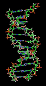 170px-DNA_orbit_animated_static_thumb-161x300.png
