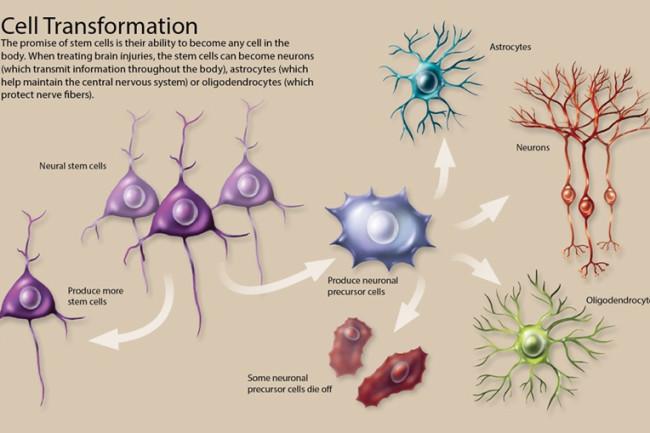cell transformation