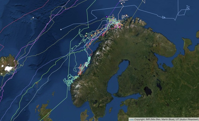 Whale Tracking