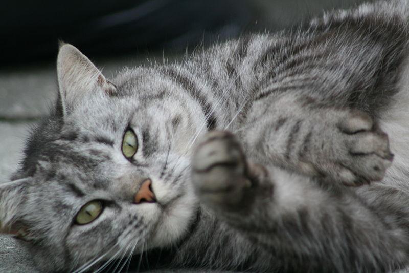 Cute_cat_1698598876.jpg