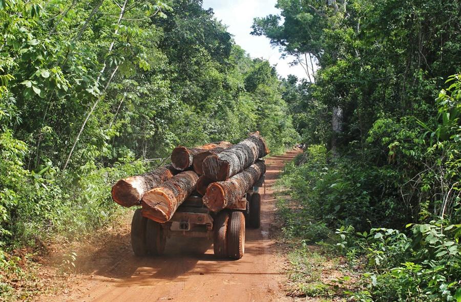 Timber Haul, Noh-Bec, Mexico - Peter Ellis - DSC-NT1216 02