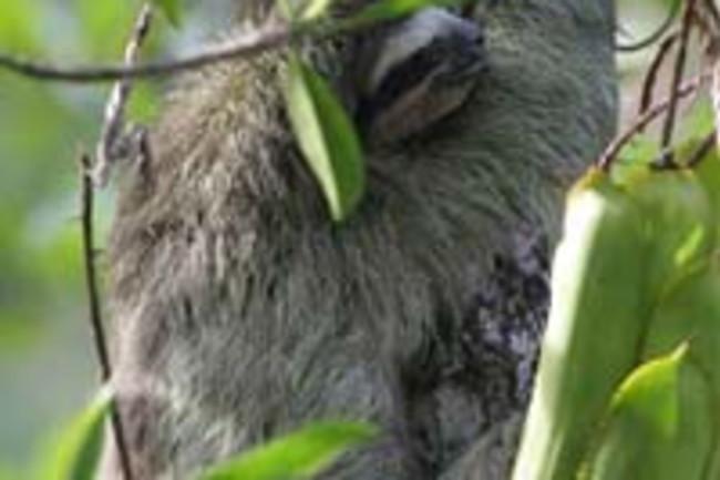 Sloth-IMG_7707small.jpg