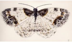 mothing-300x174.jpg