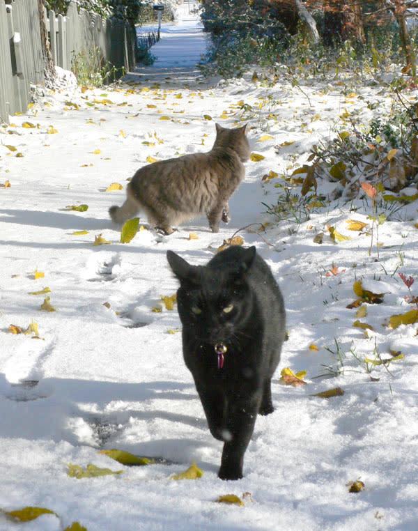 snowpair2.jpg