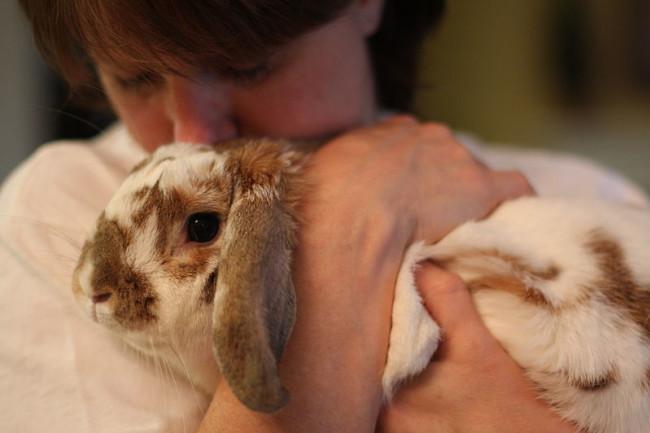 800px-Bunny_Cuddle.jpg