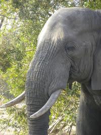 Elephant-head.jpg