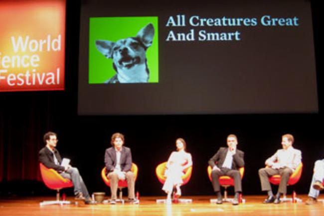 WSF-creatures.jpg