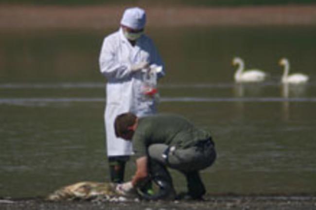bird-flu-doctors.jpg