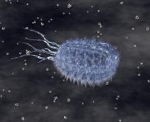 e-coli.JPG