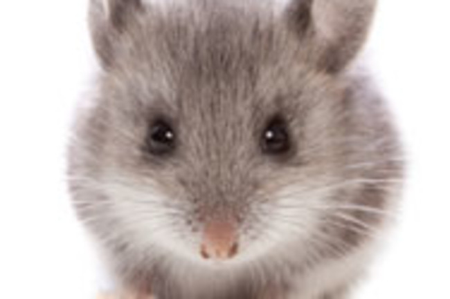 mousekey.jpg
