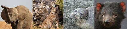 threatened-mammals.jpg