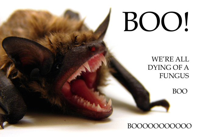 bat-card.jpg