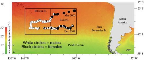 Sharkmap.jpg