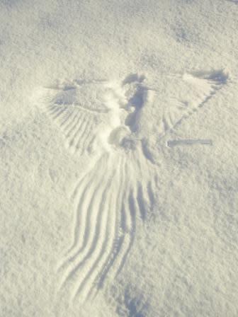 Wingprint.jpg