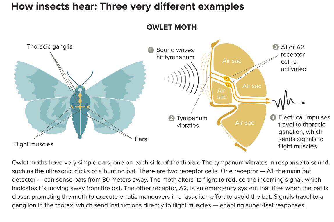 Hearing-1