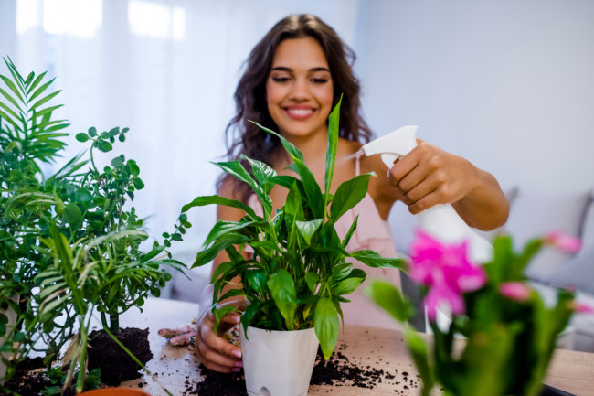 Woman Watering House Plants with Spray Bottle - Shutterstock