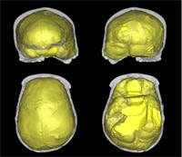 Skull-endocasts.jpg