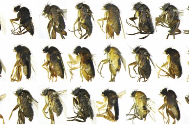 30newSpecies-1024x439.jpg