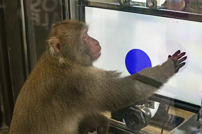 macaque-screen.jpg