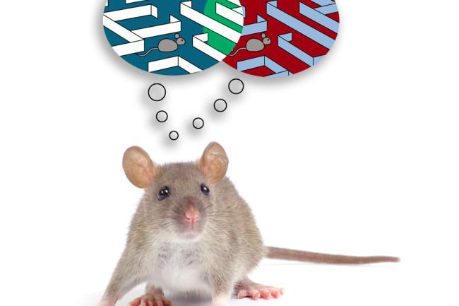 mouse-brain.jpg