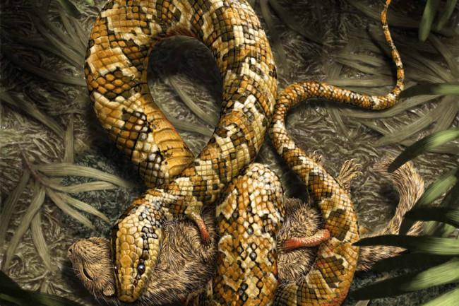 snake-arms.jpg