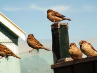 Sparrowgroup.jpg