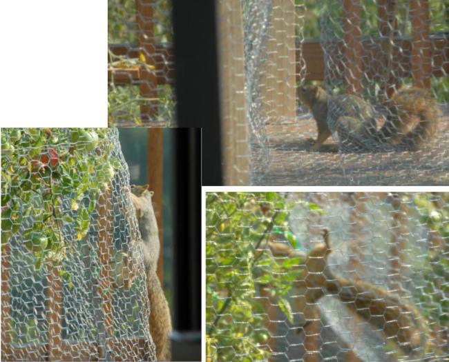 cage5.jpg