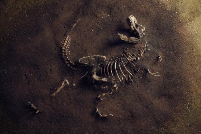 dinosaur bones poking out of the ground - mass extinction concept -- shutterstock 1542671345