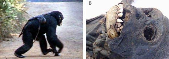 Chimp_dead_baby.jpg