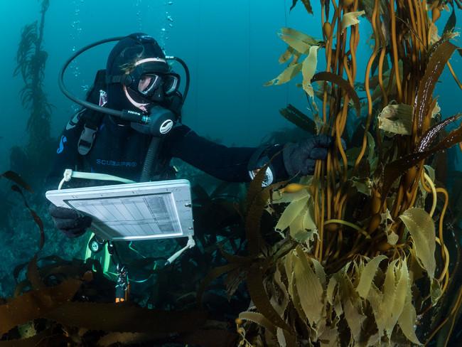 A Reef Check California diver - Kate Vylet
