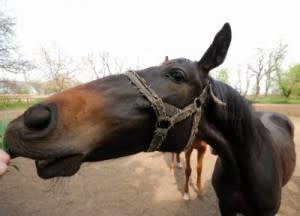 horseface-300x216.jpg