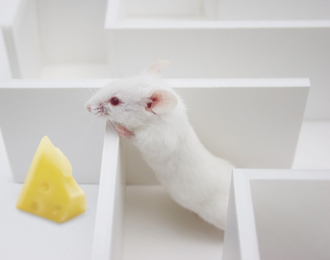 mouse-maze.jpg