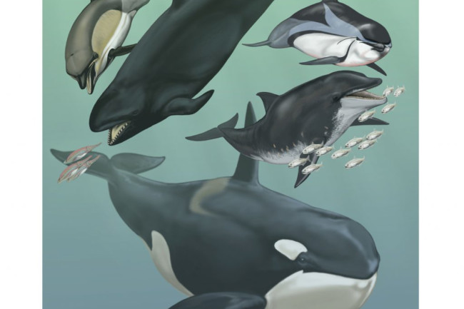 Cetaceans-1024x933