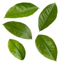 leaf-e1328302936583.jpg